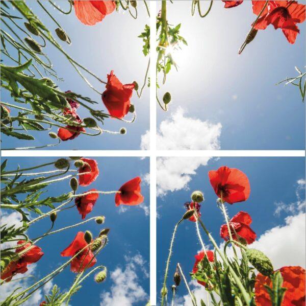 FOTOPRINT afbeelding klaproos verdeeld over 4 panelen 595 x 595 mm-0