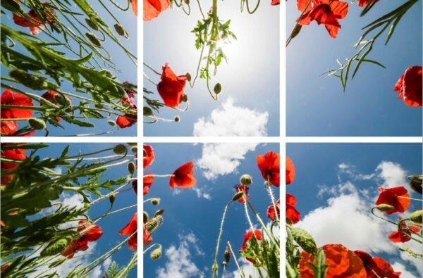 FOTOPRINT afbeelding klaproos verdeeld over 6 panelen 595 x 595 mm-0