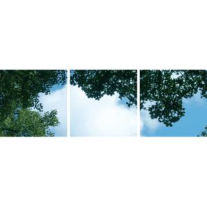FOTOPRINT afbeelding wolk-bos verdeeld over 3 panelen 595 x 595 mm-0