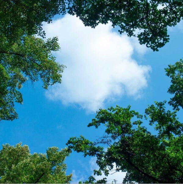 FOTOPRINT afbeelding wolk-bos verdeeld over 1 paneel 595 x 595 mm-0